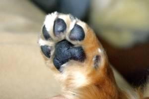 dog-leg521