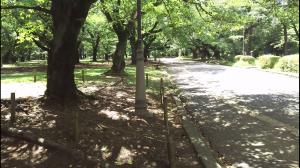 oomiya-park85