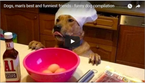 笑える犬の動画