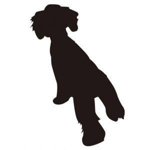 kakiudhi-pet dog