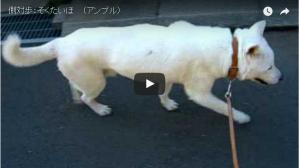 犬 側対歩(アンブル) 画像