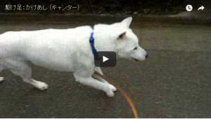 犬 駈歩(キャンター) 画像