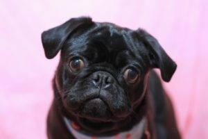種類 キムタク 愛犬