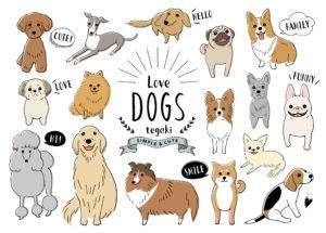さて、それでは今から、小型犬の中でも比較的飼いやすい犬種について、その性格の特徴などと合わせて、詳しくお伝えさせて頂きたいと思います。