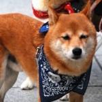 犬 オスの名前ランキング 画像