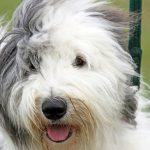 Zipの犬「そら」の犬種は? ジジとププの声帯除去の噂とは?