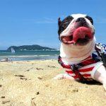 夏は愛犬とお出かけ! 犬連れで行けるお出かけスポット一覧は?