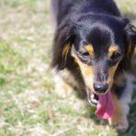 夏の犬の散歩時間はどの位が良い? 真夏の場合時間帯は?
