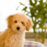 犬 芸能人一覧 画像