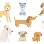 賢い小型犬 ランキング 画像