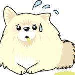 犬が黄色い泡のような液体を吐くのは何故? 原因は?