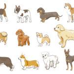 日本で人気 小型犬 中型犬 大型犬 ランキング 画像