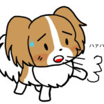 犬が過呼吸みたいな呼吸(ブヒブヒフゴフゴ)をする理由や対処法は?