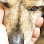 犬の最期(最後)の様子はどんな感じなの? 行動や鳴き声は?