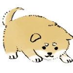 犬が飼い主の前で床に顔をこすりつけるのは何故? かゆいの?