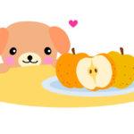 犬は梨を食べても大丈夫?(食べれるか) 皮の部分は?