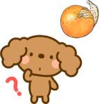 犬がみかんの皮を食べたけど大丈夫なの? 下痢や嘔吐の心配は?