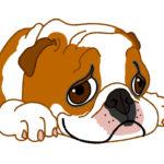 犬の病気で腎臓病の場合の余命は? 症状はどんな感じ?