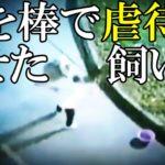 【中国】男が犬を消火栓に繋ぎ棒で殴り○す暴挙! 他ピットブルが警官によって射○される事件(虐待,中国人,銃)[令和TV闇ニュース]